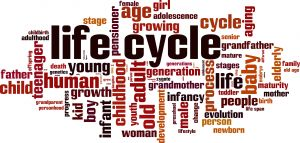 Words related to Life Cycle